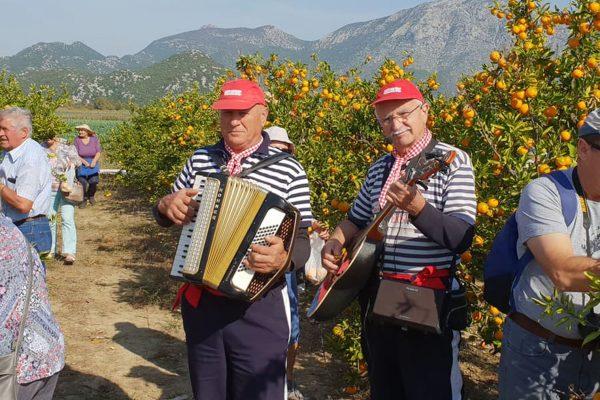 Villa-Neretva-berba-mandarina-147
